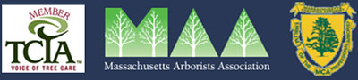 Certified Mass Arborist License #1272